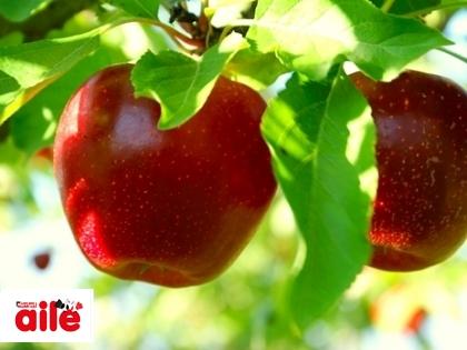 Elma Kabuğundaki Mucize