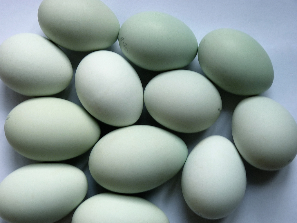 Yumurta zayıflatıyor